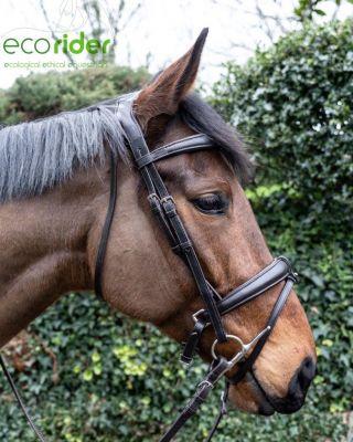 EcoRider Ecolux Bridle
