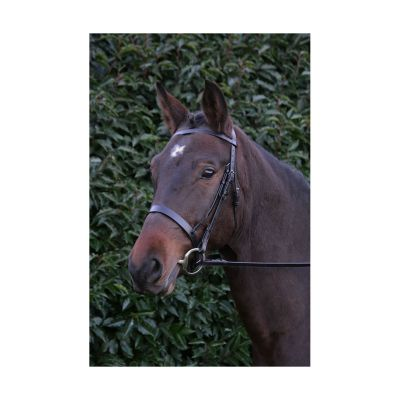 Hy Hunter Bridle with Rubber Grip Reins